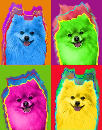 Pomeranian Art And Pictures
