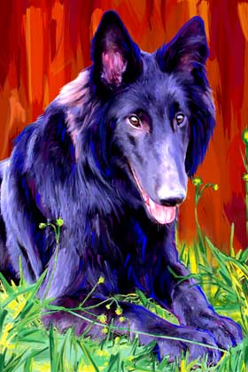 belgian sheepdog art