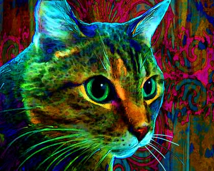 cat portraits by art paw prints on canvas cat art 420x336