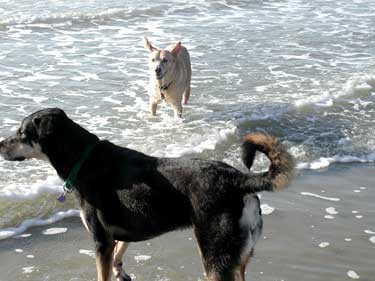 dogphoto