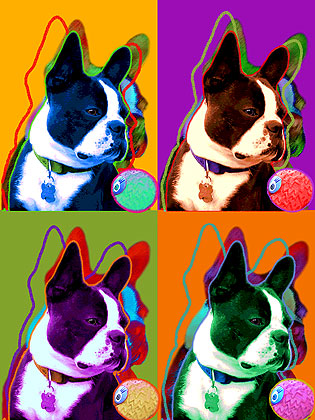 boston terrier warhol art