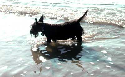 Nessie Beach
